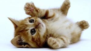 A chi non piacciono i gattini?